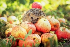 Новость. Город: Феодосия - Масштабный праздник урожая состоится в Коктебеле в сентябре