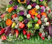 В Насыпном проведут «Праздник Урожая и Молодого вина»