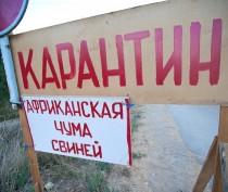 Аксёнов исключил из карантинной зоны по африканской чуме свиней заказник «Останинские плавни»