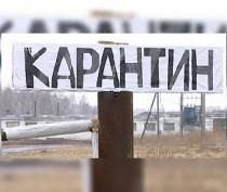 Аксёнов ввёл карантин по бешенству в селе Семёновка Ленинского района