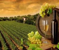 Вьетнамцы заинтересовались крымской винодельческой продукцией