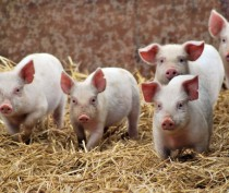 Господдержка малого агробизнеса в Крыму увеличится более чем вдвое