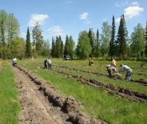 Более 200 га лесов будет высажено в Крыму осенью