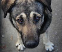 В Крыму полиция возбудила уголовное дело по факту жестокого обращения с собакой
