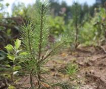Более 20 тысяч деревьев и кустарников высажено в Крыму с начала года