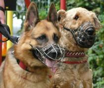 Минимальный штраф за отказ от регистрации домашнего животного составит в Крыму 500 рублей