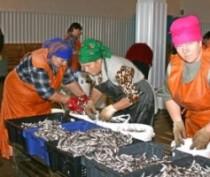 В Феодосийском музее древностей презентуют книгу о рыболовецком колхозе