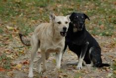Новость. Город: Феодосия - В Феодосии собирают подписи под коллективным обращением в защиту бездомных животных (+ опрос)