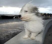 Новости Феодосии: Феодосии обещают сильный порывистый ветер