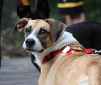 Новости Феодосии: Феодосийка «заработала» протокол, выгуливая собаку