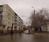 Новости Феодосии: В Феодосии подсчитали: почти четверть высаженных в прошлом году саженцев украли