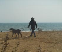 Новости Феодосии: На феодосийском пляже  «Алые паруса» (фоторепортаж)