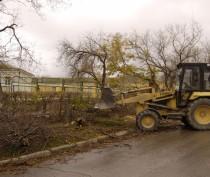 Феодосийские депутаты заинтересовались судьбой спиленных деревьев