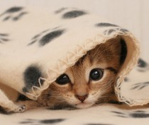 Новости Феодосии: В Феодосии небольшое похолодание