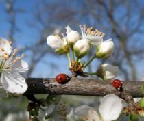 Новости Феодосии: В Феодосии сегодня солнечно