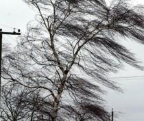 Новости Феодосии: МЧС предупредило о грозах и шквалистом ветре в Крыму