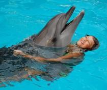 Новости Феодосии: В Коктебеле завтра открывается дельфинарий