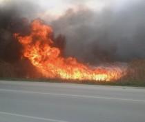Новости Феодосии: Под Феодосией горел камыш