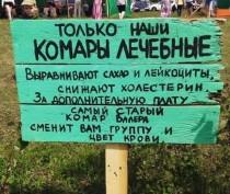 Новости Феодосии: Сегодня нужно следить за комарами