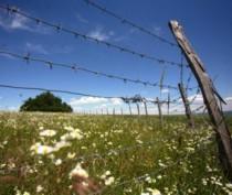 Руководство феодосийского села сообщает о росте случаев самозахвата земли