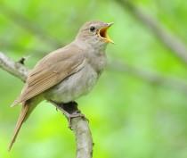 Новости Феодосии: Птички больше петь не будут?