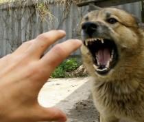 В Керчи зафиксировали рост количества пострадавших от укусов животных