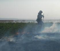 Пожарные 2 часа тушили горящую траву под Феодосией