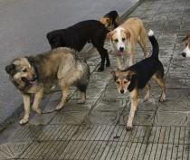 В Феодосии на женщину и ребенка набросилась стая собак