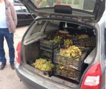 Очередному уличному торговцу так и не удалось продать в Феодосии свои фрукты-овощи