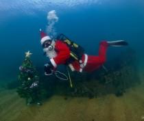 Морская елка в Феодосии и хороводы на дне моря