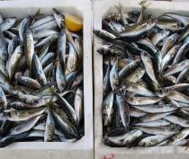 Власти Феодосии сообщают о борьбе с «рыбной мафией»