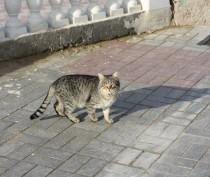 Небольшое потепление в Керчи