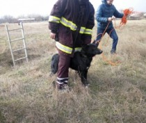 В Керчи специалисты МЧС провели операцию по спасению упавшей в огромную яму собаки