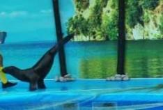 Открытие дельфинария в Феодосии (от Карунных)