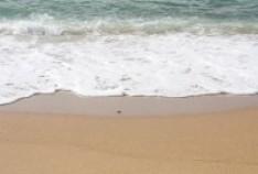 Золотой пляж - лучшее место для отдыха